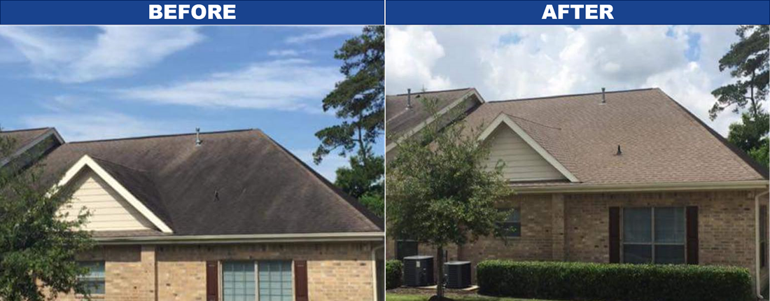Professional Roof Washing Soft Wash Shane S Pristine